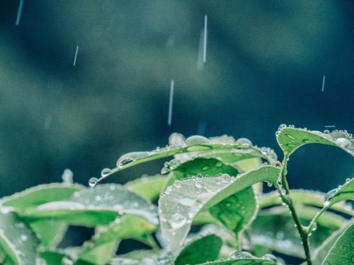 雨が葉に落ちる写真です。