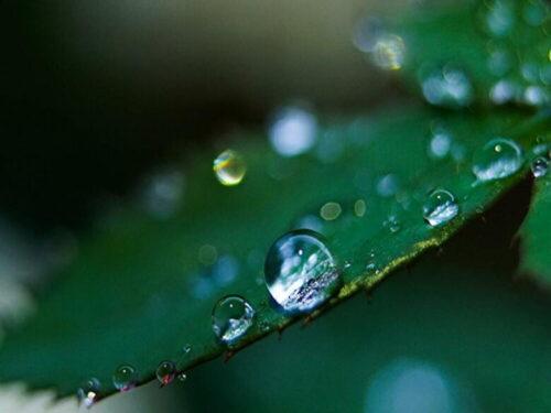 雨の様子水滴の写真