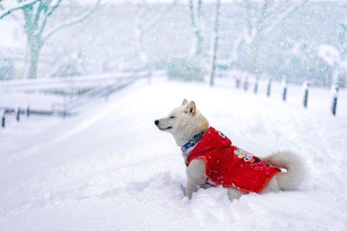 犬も喜ぶ雪