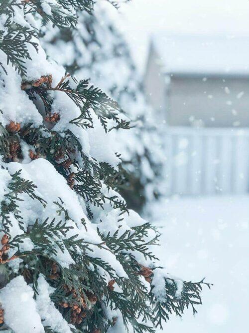 雪が積もる写真