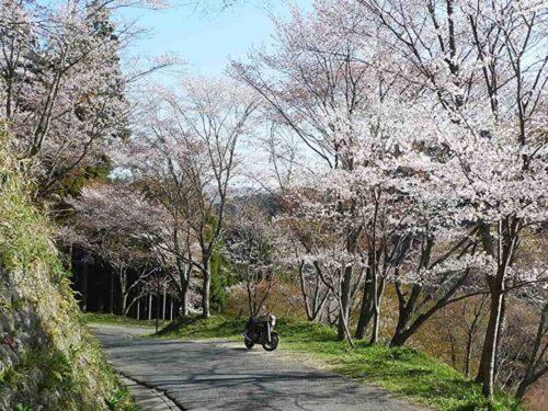 吉野山 桜とバイク