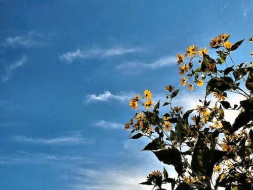 空と花 天気とことわざ