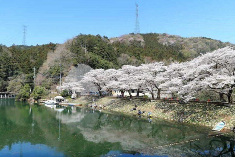 新春、サクラが映える鎌北湖