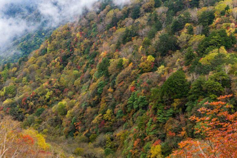 日本百名山 秩父両神山の景色