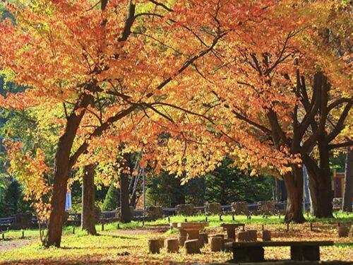 北海道 円山公園