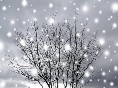 雪が降ってきた真冬日のイメージ