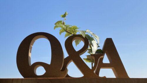 Q&A小物とツタ_ 青空背景