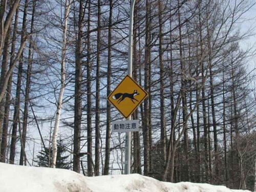 キタキツネの標識
