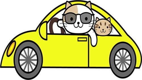 ドライブ猫