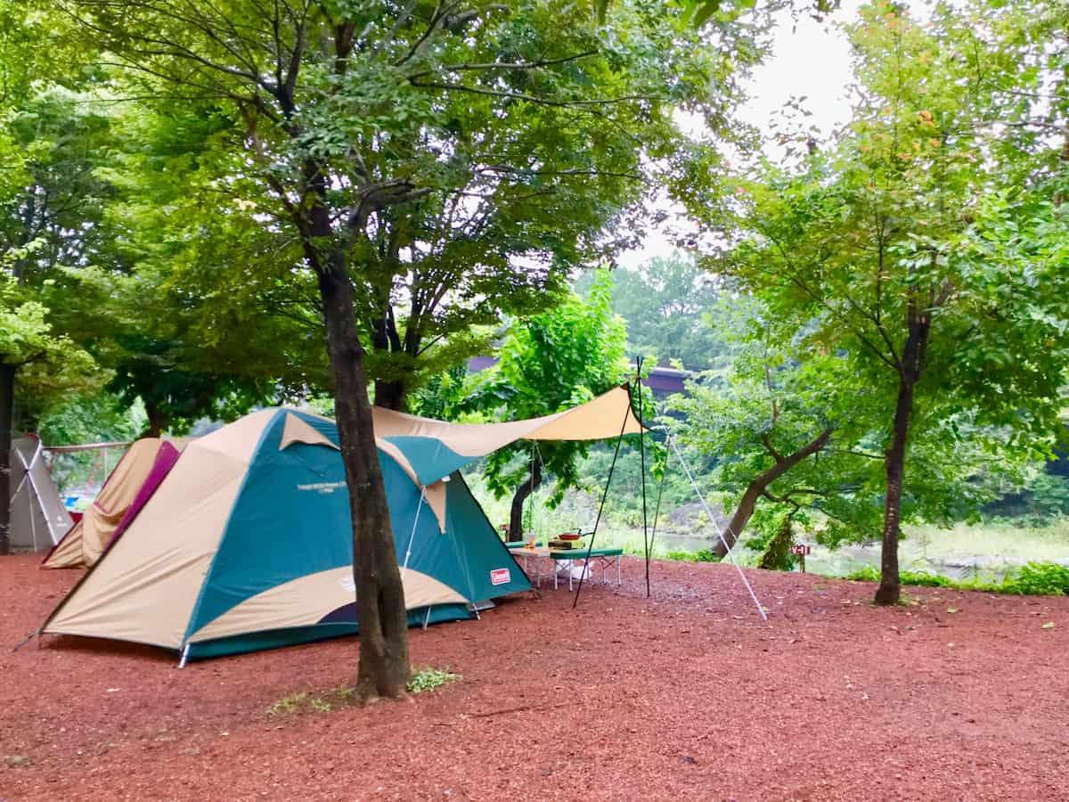 埼玉キャンプ